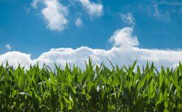 产品+服务,云和恩墨SQL审核助力福建农信业务升级