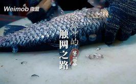 """闯荡5年之久,全国300+门店,以鱼试江湖!这是江湖盟主""""令狐冲""""的传奇故事……"""