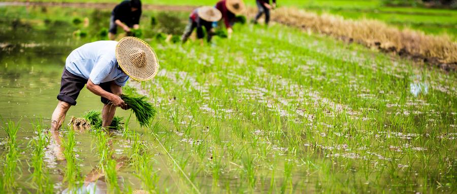 固国之根基 | 云计算助力农业信息化升级