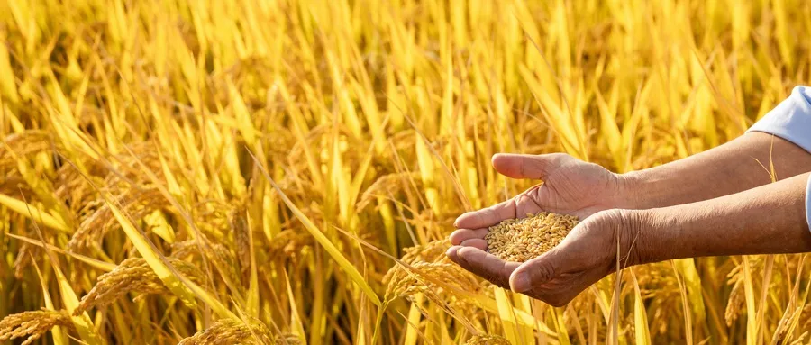 华宇万户助力黑龙江省农业农村厅 打造农业发展新标杆